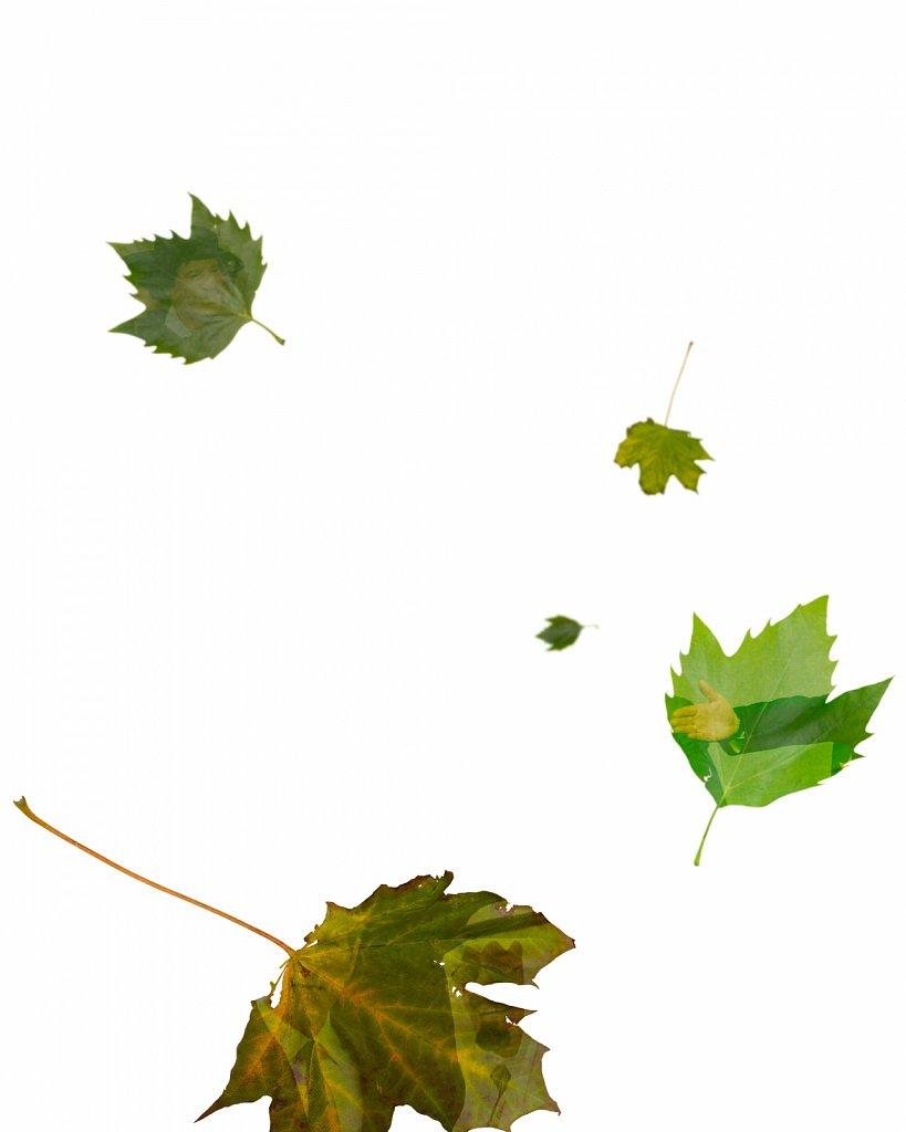 Human Leaves D