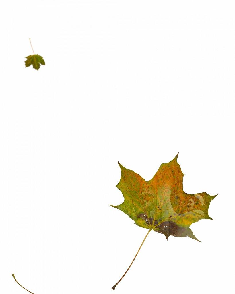 Human Leaves E