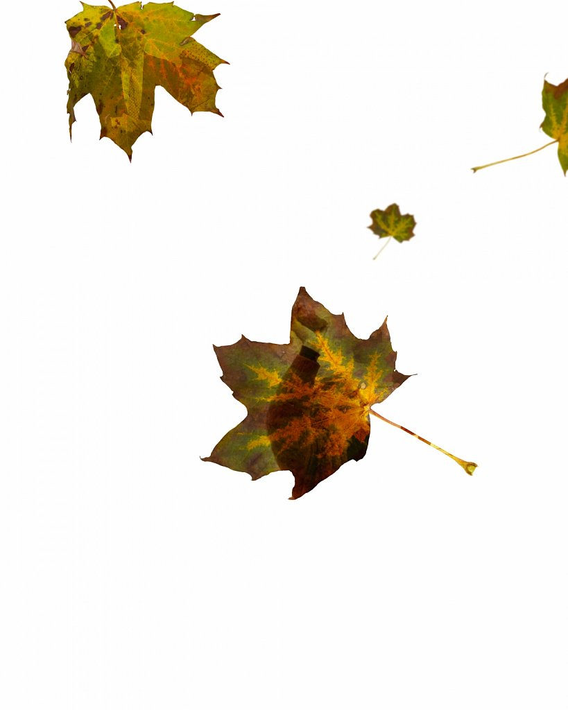 Human Leaves F