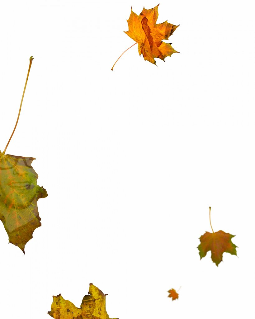 Human Leaves K