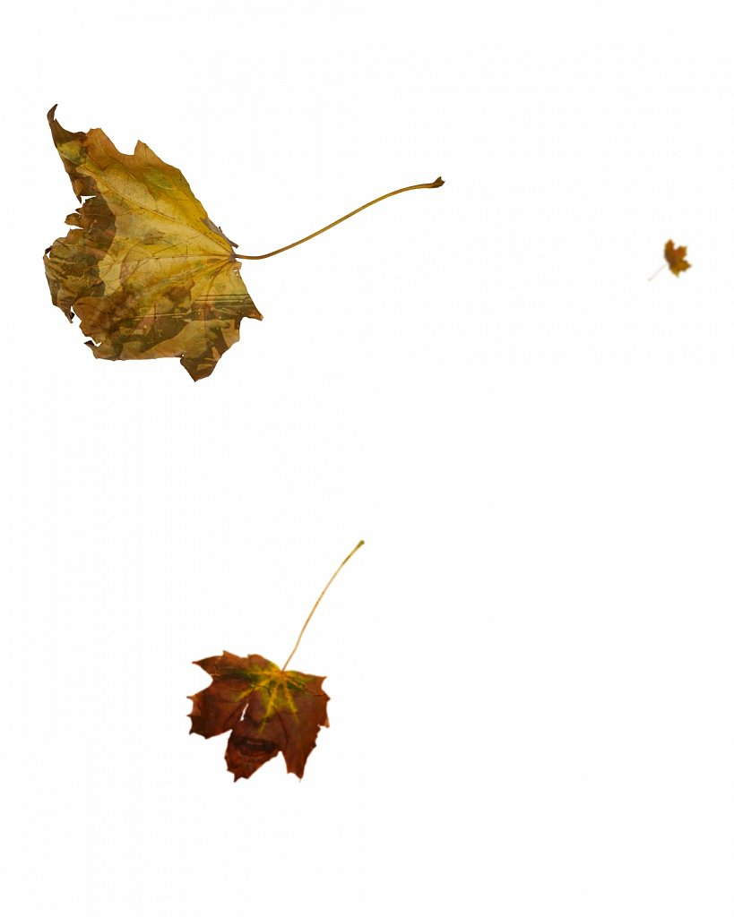 Human Leaves O