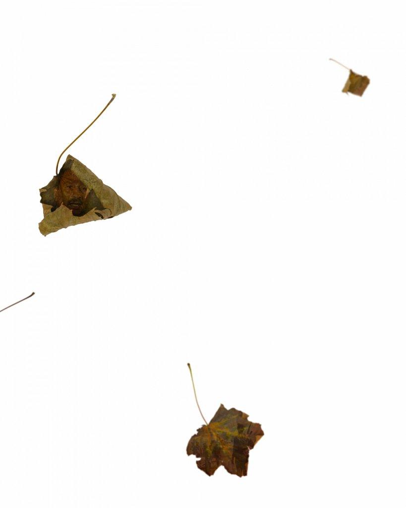 Human Leaves P