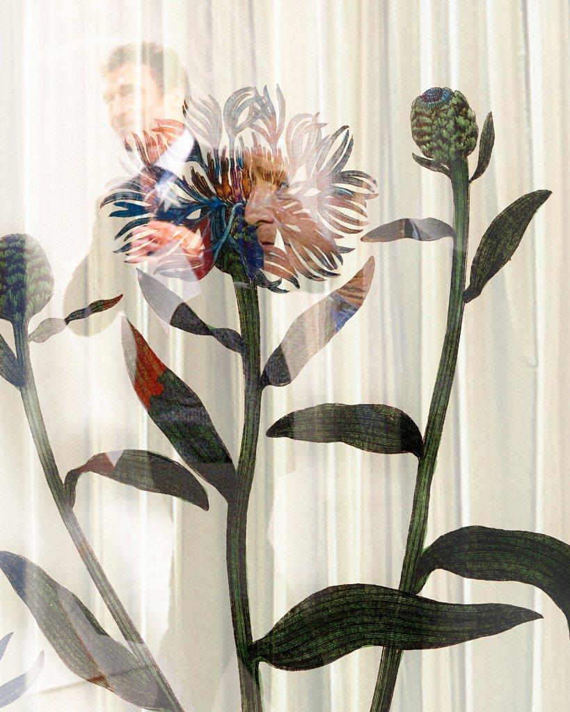 Flora Danica III,  Tab. 21