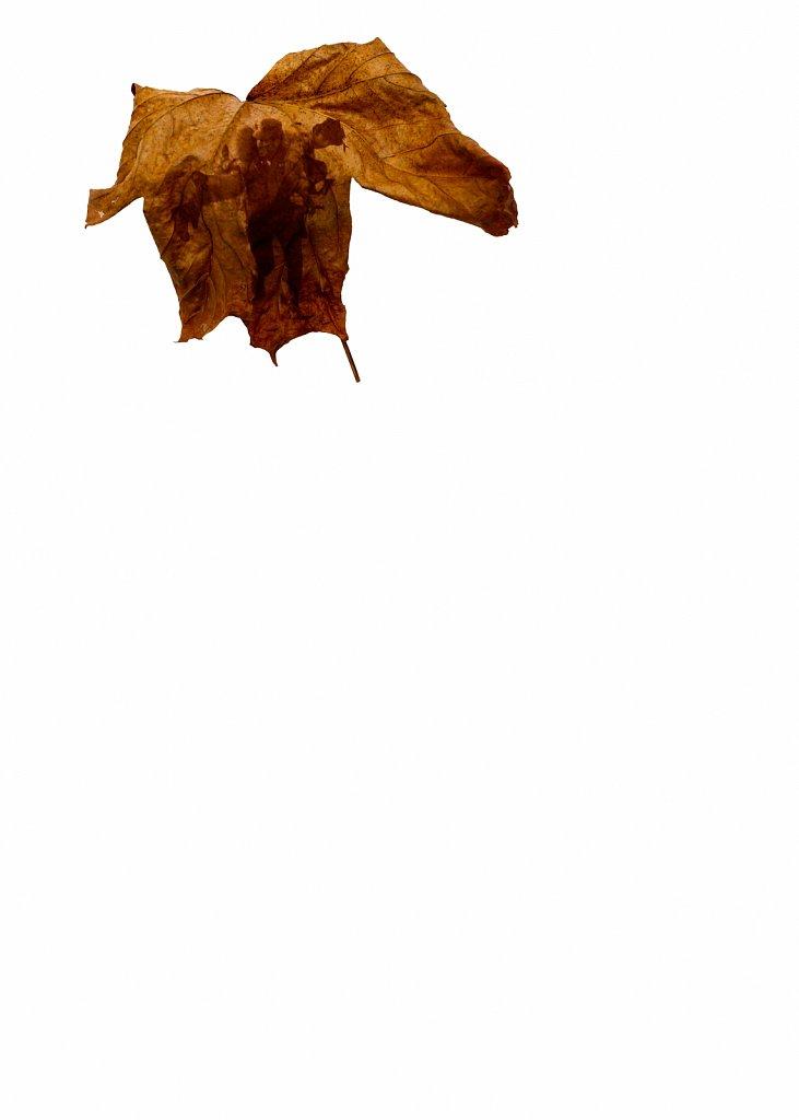 Human Leaves no. 14