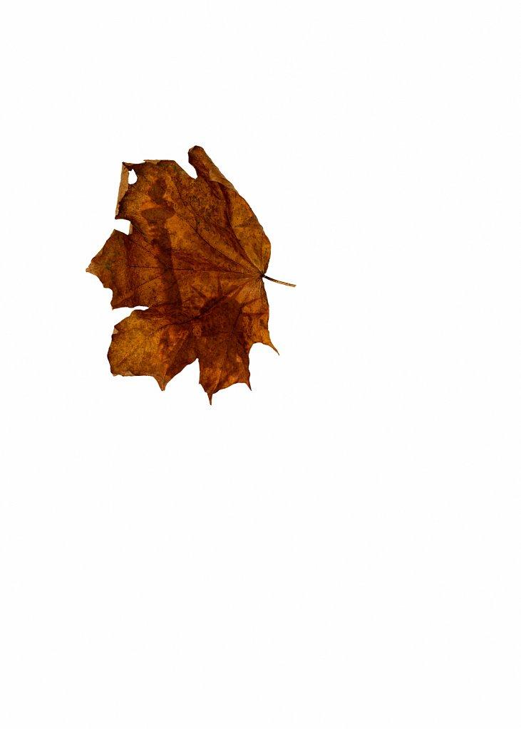 Human Leaves no. 13