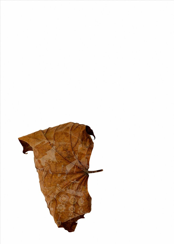 Human Leaves no. 9