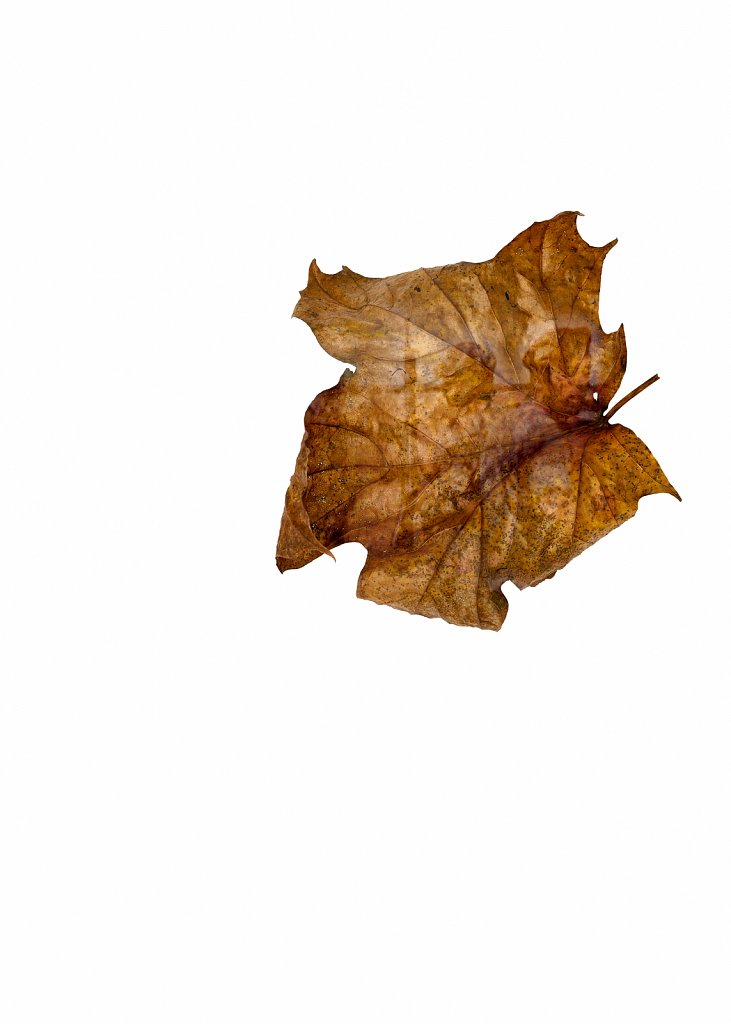 Human Leaves no. 8